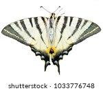 scarce swallowtail butterfly ... | Shutterstock . vector #1033776748
