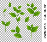 green branches with leaves... | Shutterstock .eps vector #1033783504