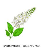 flowers of mayday tree.... | Shutterstock .eps vector #1033792750