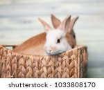 cute baby bunnies sitting in a... | Shutterstock . vector #1033808170