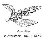 berry fruit  illustration hand... | Shutterstock .eps vector #1033826659
