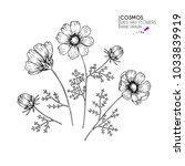hand drawn wild hay flowers.... | Shutterstock .eps vector #1033839919