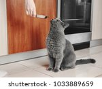 cat with owner in kitchen asks... | Shutterstock . vector #1033889659