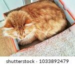 cat in a box | Shutterstock . vector #1033892479
