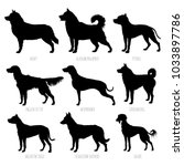 dog breeds silhouettes set.... | Shutterstock .eps vector #1033897786