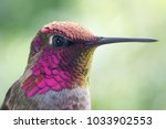 Hummingbird Portrait And Macro