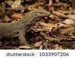 varanus lizard in the... | Shutterstock . vector #1033907206