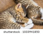 two cute small kitten sleeping... | Shutterstock . vector #1033941850