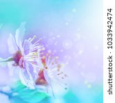 beautiful cherry sakura flowers ...   Shutterstock . vector #1033942474