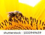 Bumble Bee Pollinator...