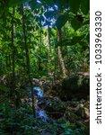 daintree rainforest trees   Shutterstock . vector #1033963330