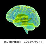 3d colorful glowing xray brain... | Shutterstock . vector #1033979344
