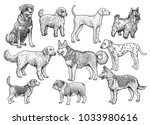 Stock vector dog collection illustration drawing engraving ink line art vector 1033980616