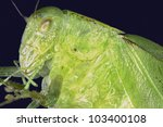 extreme macro insect... | Shutterstock . vector #103400108