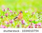 spring story bird sings in... | Shutterstock . vector #1034010754