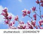 fresh spring flowers tulip... | Shutterstock . vector #1034040679