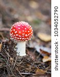 Fly Agaric At The Forest ...