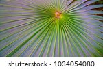 giant palm leaf spread nature | Shutterstock . vector #1034054080