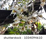 white orchid on the tree | Shutterstock . vector #1034094610