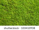 Green Lichen Background On The...