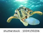 Stock photo plastic pollution problem sea turtle eats plastic bottle 1034150206