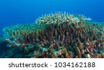 a marine life with coral... | Shutterstock . vector #1034162188