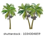 acai palm tree  euterpe... | Shutterstock .eps vector #1034304859