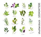 clip art illustrations of herbs ... | Shutterstock .eps vector #1034347330