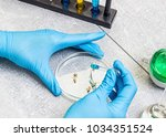 selection laboratory. breeder... | Shutterstock . vector #1034351524