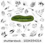 set of leaf imprints  natural... | Shutterstock .eps vector #1034354314