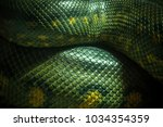 Texture And Body Of Anaconda...