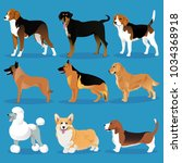 set of dogs | Shutterstock .eps vector #1034368918