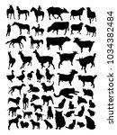 vector set of farm animals | Shutterstock .eps vector #1034382484