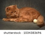 red cat lying on the couch | Shutterstock . vector #1034383696