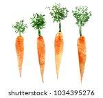 Set Of Watercolor Carrots. Hand ...