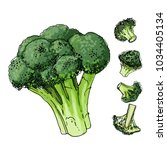 broccoli cabbage painted with a ... | Shutterstock .eps vector #1034405134