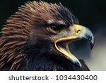 close up head portrait of a... | Shutterstock . vector #1034430400