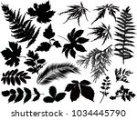 illustration with black foliage ... | Shutterstock .eps vector #1034445790
