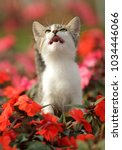 cute cat kitty is playing in... | Shutterstock . vector #1034446066