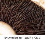 Gills On A Field Mushroom
