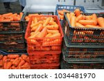 A Lot Of Fresh Washed Carrots...