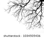 Branch Of Tree Silhouette On...