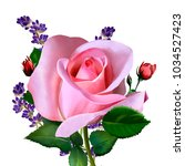 Stock photo luxury pink rose petals and buds lavender flowers on a white background it can be used as 1034527423