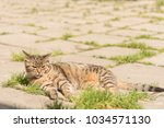 striped cat on the street. | Shutterstock . vector #1034571130