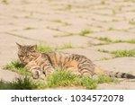 striped cat on the street.  | Shutterstock . vector #1034572078