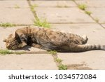 striped cat on the street.  | Shutterstock . vector #1034572084
