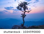 a lonely tree on the cliff with ... | Shutterstock . vector #1034590000