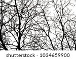 Branches Of Dry Trees Isolated...