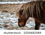 typical icelandic hairy horse... | Shutterstock . vector #1034682484