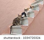 Three Companioned Cats Of...